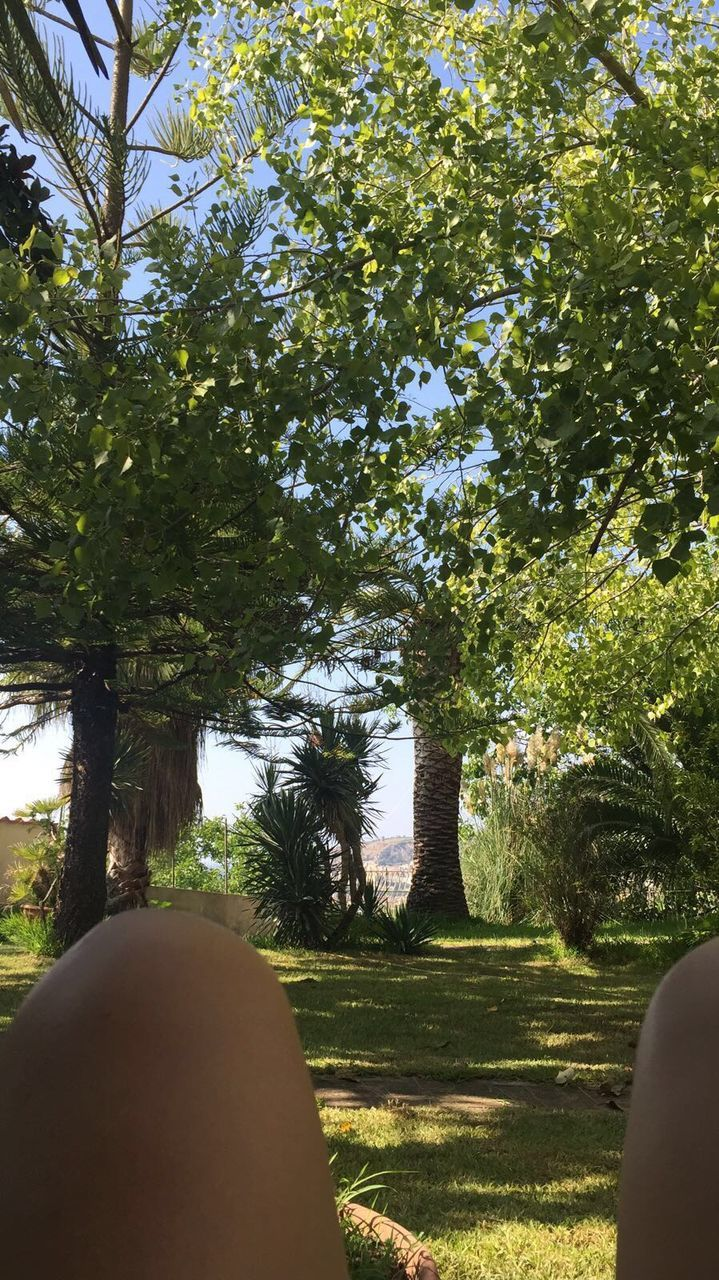 tree, day, one person, real people, growth, grass, sunlight, nature, women, outdoors, men, beauty in nature, adult, adults only, people