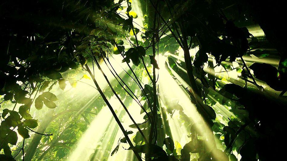 Rayoflight Trees Light And Shadow Divine Light  Light And Darkness  Nature's Diversities