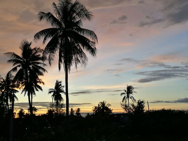 Palm Tree Tree Sunset Cloud - Sky Beauty In Nature Sky No People Outdoors Landscape Nature