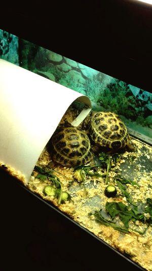 Две балдежные черепашки) черепаха работатьнадо Turtles First Eyeem Photo