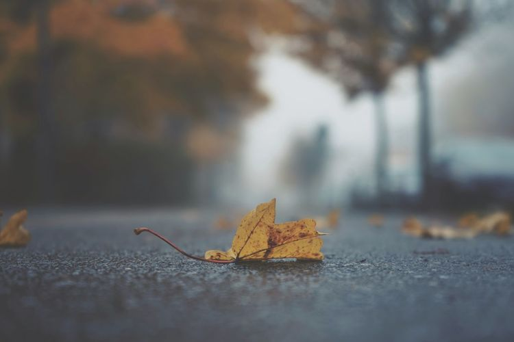 Close-up of dry leaves on street