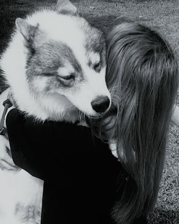 One Animal One Person Domestic Animals Pets Animal Themes Love Real People Husky Dog