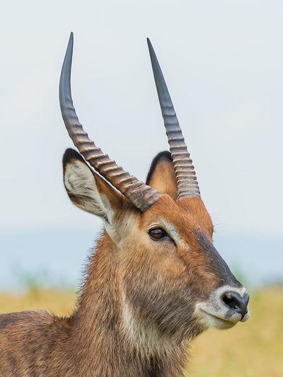Close-up of deer on field against sky