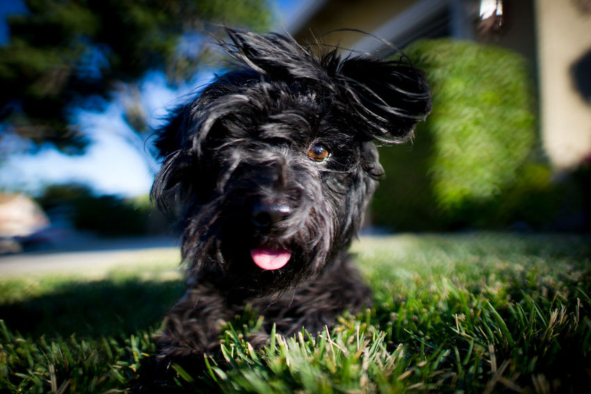 Black Dog Cute Puppy Dog Photography Dog Portrait Happy Dog Pet Photograph Pet Photographer Pet Photography  Pet Photos To Make You Smile Pet Portraits Pet Portraiture Shaggy Dog