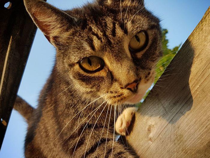 Alphons Miguel Rodriguez III Fence Sky Pets Feline Portrait Domestic Cat Close-up Whisker Cat