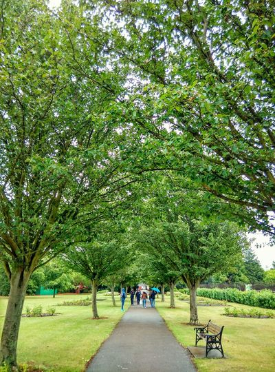 Park Summer Green Green Green!  Walking Around Nature London United Kingdom