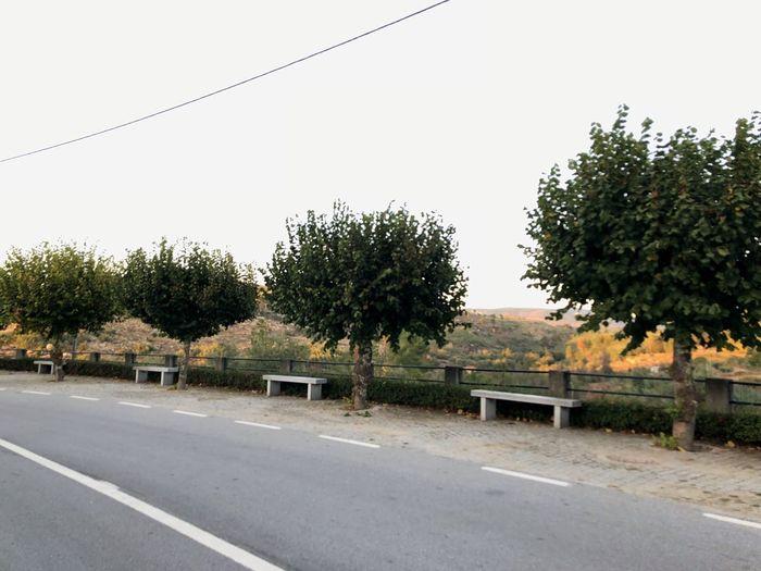 Road Plant Tree