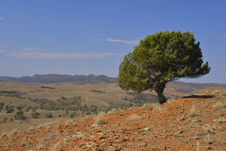 Arid Climate Barren Desert Dry Field Growth Landscape Mountain Mountain Range Outdoors Red Dirt Remote Tree EyeEmNewHere