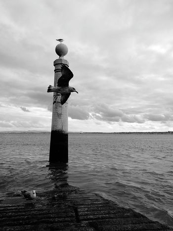 Seagulls In The City Travel Destinations City Life No People Water Sky Nature Seagull Seagull Flying Lisbon Lisbon - Portugal Black And White Blackandwhite Simmetrical Simplicity Patterns