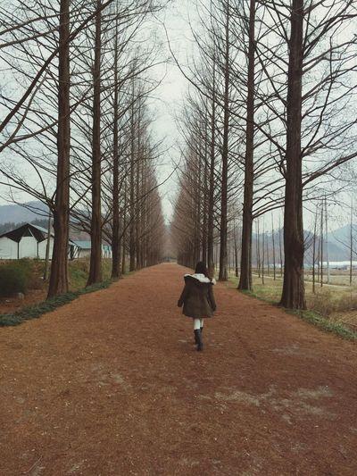 Damyang Damyang Metasequoia Road Korea Selfportrait