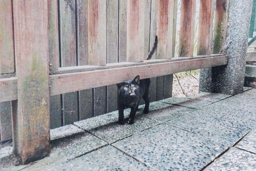 2016 喵咪早安 Cat Mobilephotography Nexus5x Nexus 5x Nexusphotography Nexus