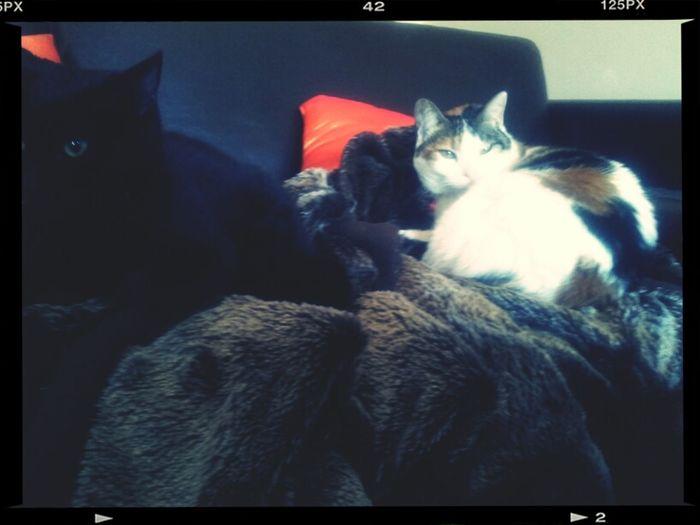 Murphys And Martha Taking A Break In Between Fights!