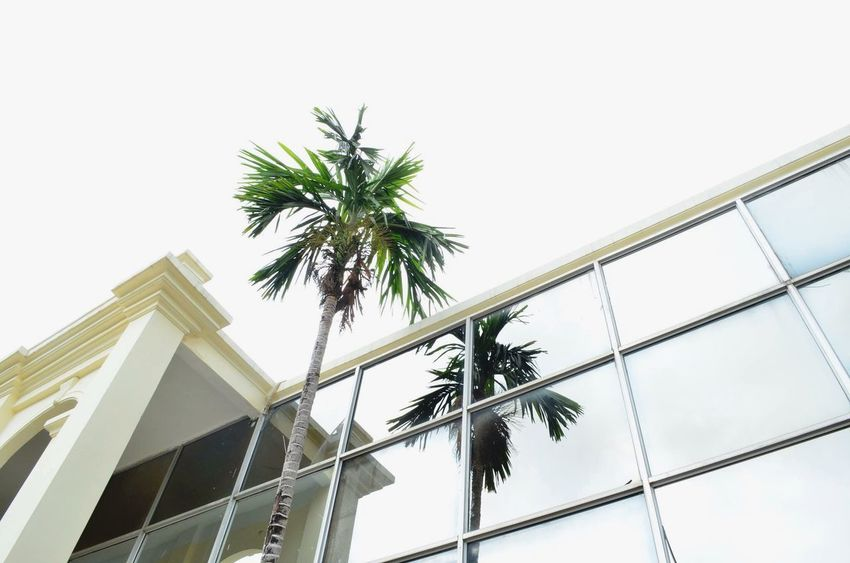 modernisation. Palm Trees Building Streetphotography
