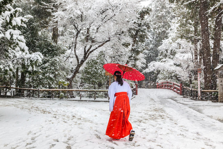 Japanese woman in traditional red cloth walking in the snow Garden In The Snow.. Japanese Woman In Traditional Red Cloth Walking In The Snow Cold Temperature Japonaise En Habit Traditionnel Rouge Dans La Neige Nature One Person Red Red Japanese Umbrella Red Hakam Snow Snowflake Snowing Tree Winter