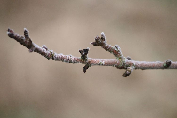 Fragility Vulnerability  Twig Close-up Nature Focus On Foreground Branch Bokeh Frozen Frozen Nature Frosty Frosty Mornings Cold Nature Photography Beautiful Nature Wintertime Winter Naturelovers EyeEm Nature Lover Beauty In Nature Selective Focus EyeEm Gallery Eye4photography  Growth Plant