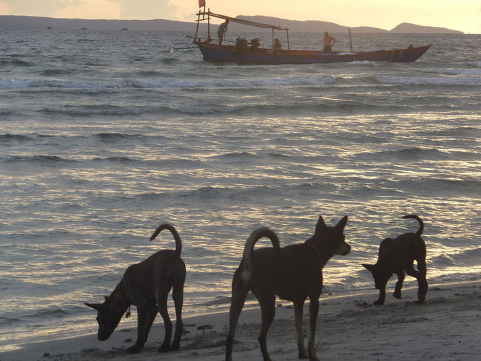 Beauty In Nature Coastline Dogs Horizon Over Water Nature Outdoors Scenics Sea Ship Shore Sky Water Wave