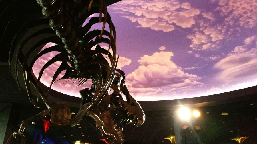 Cerritos Library Dinosaur Artificial Sky Creative Light And Shadow