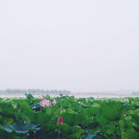 summer view Street Photography Flower EyeEm Nature Lover City