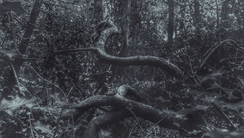 A Walk In The Woods I See A Snake TreePorn Wild Nature Is It Alive Looks Like... Wandering Around Aimlessly Lost In The Woods Feeling Inspired For The Love Of Black And White