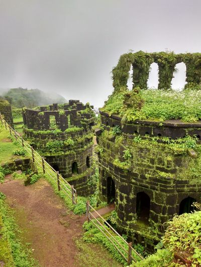 Outdoors Tree Day No People Nature Sky Beauty In Nature Nature Holiday Power In Nature Freshness Plant Backgrounds Fort Raigad