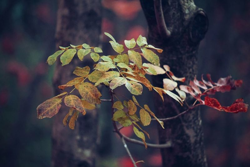 Close-Up Of Plant In Forest During Autumn