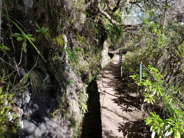 Caldeirão Verde Water Levada Nature_collection Nature Photography Plants Levada Walk Bildfolge Photography Landscape_Collection Landscape_photography Vacation Time Madeira Island Shadow Sunlight Day Outdoors High Angle View No People Nature