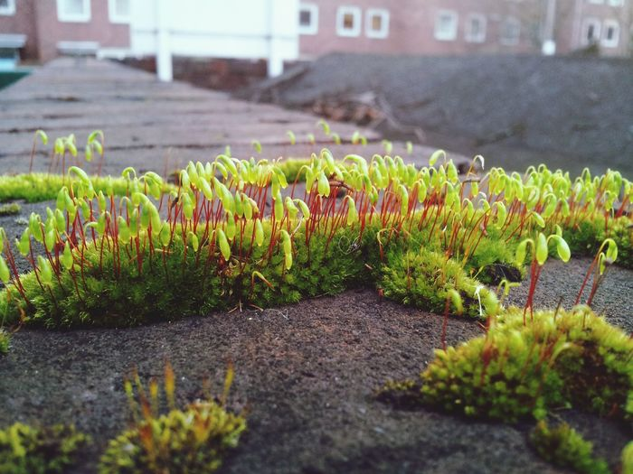 Nature On Your Doorstep, moss, urban grown, look but we dont see.