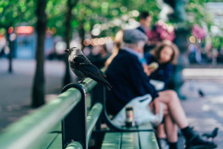Close-up of crow perching on seat in city