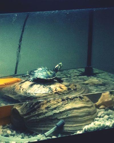 Cute Pets Yoga Maître Yoda Turtle Love