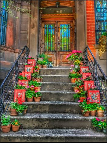 Lazzaroni Amaretti Tin's w/ Geraniums - 5/9/16 As I Sees It Creative Blending Of Images W/ Layers In PS CC2016 EyeEm Best Edits EyeEm Best Shots EyeEm StreetPhotography, NYC IPhone Creative Edits W/ Snapseed IPhoneography 6s The Photojournalist – 2016 EyeEm Awards The Street Photographer - 2016 EyeEm Awards Fresh on Market May 2016