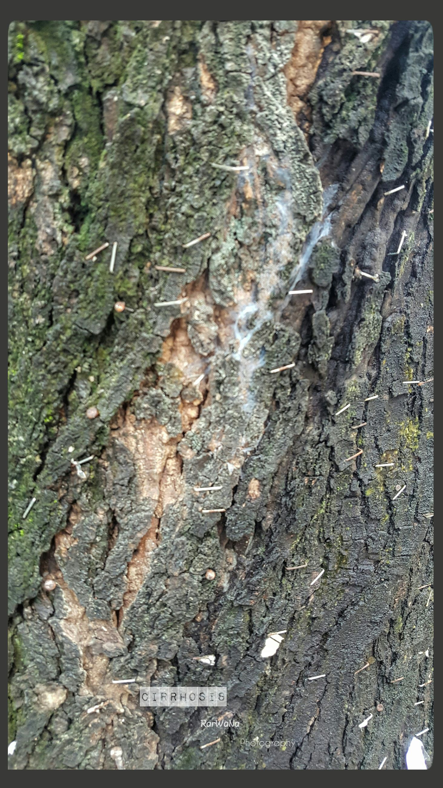 backgrounds, full frame, textured, tree trunk, auto post production filter, transfer print, close-up, growth, bark, rough, moss, nature, natural condition, green color, outdoors, extreme close-up, weathered, no people, botany, beauty in nature