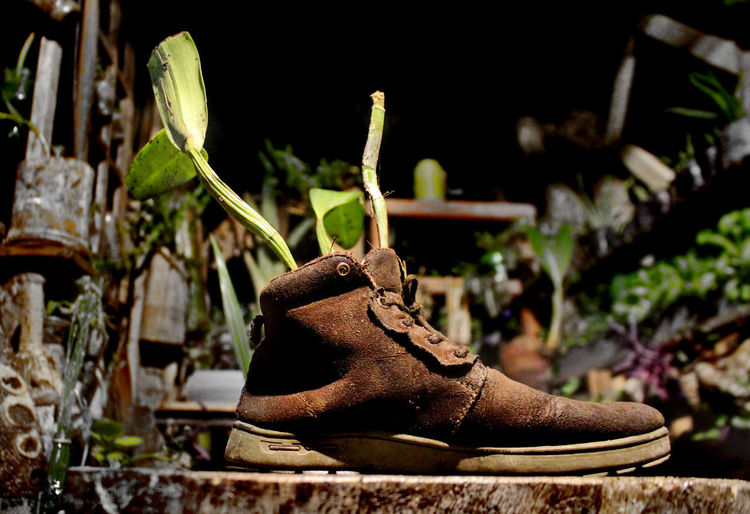 Close-up of shoes on plant