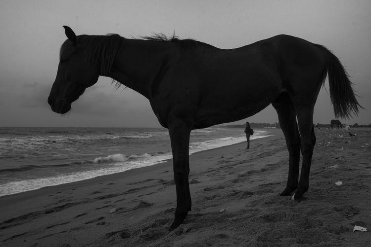 Horse on beach against sky