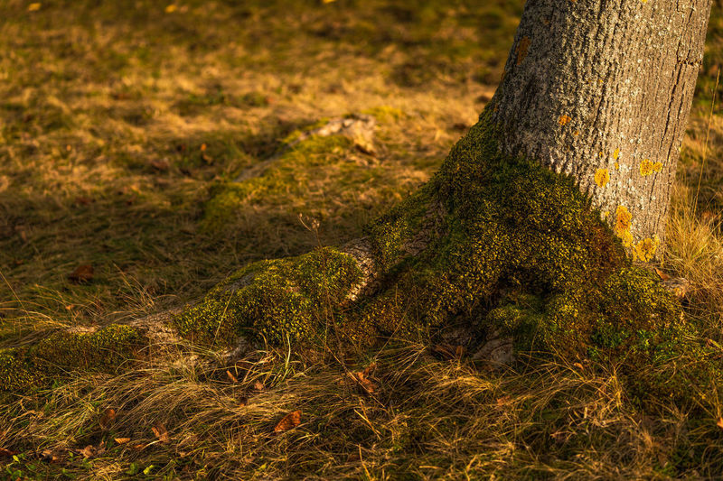 Close-up of moss on tree trunk