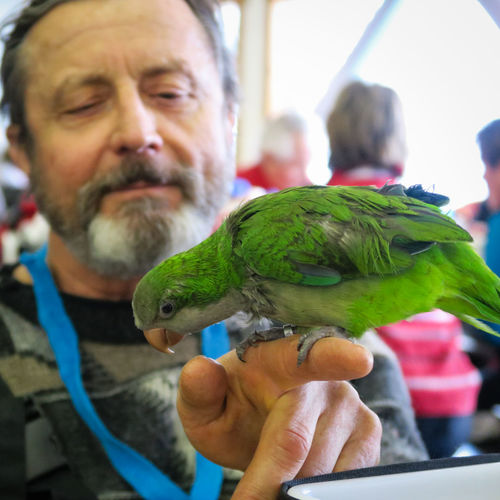 Skimates Bill and Rudy Birds Close-up Friendship Green Parrot Loyal Pets Loyalty Parrot Parrot Lover Pet Portrait Real People Whitewater The Portraitist - 2017 EyeEm Awards Pet Portraits
