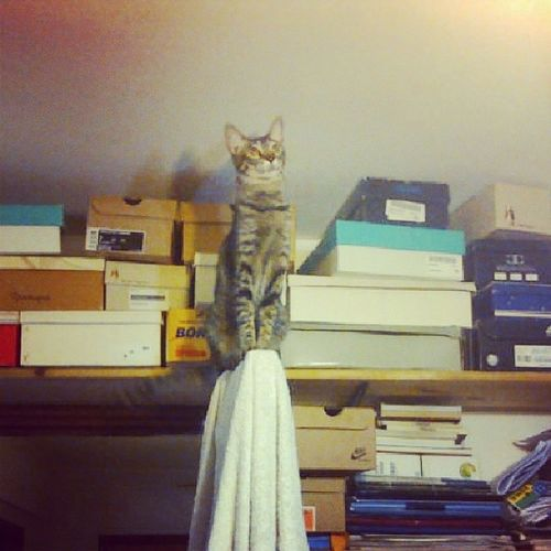 No sabía que teníamos un adorno sobre la puerta.. Popis Cat Pet