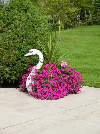 Driveway decor Swan Flower Box Beauty In Nature Cascading Petunias Color Contrasts Flower Grass Green Color Outdoor Flowers