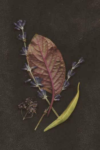 Herbarium Herbs Scanery