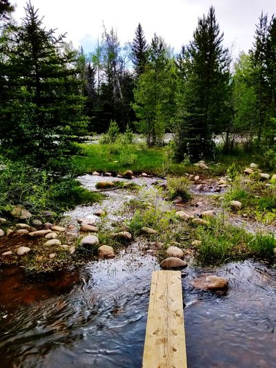 Wyoming Uinta Wilderness Mountains Remote Places Wyoming Landscape Riverbank Blacks Fork River Tree Water Wet Reflection Sky Flowing Water Flowing