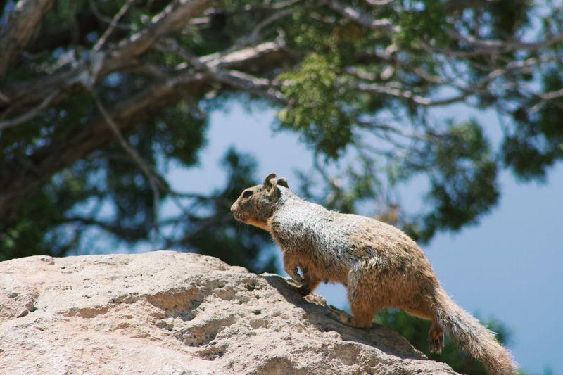 The chase is on Travel Explore Squirrel Animal Wildlife Animal Themes Animal Animals In The Wild Mammal One Animal Vertebrate Rock Tree