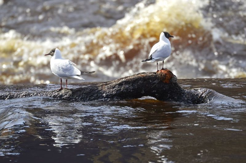 Seagulls perching on rock