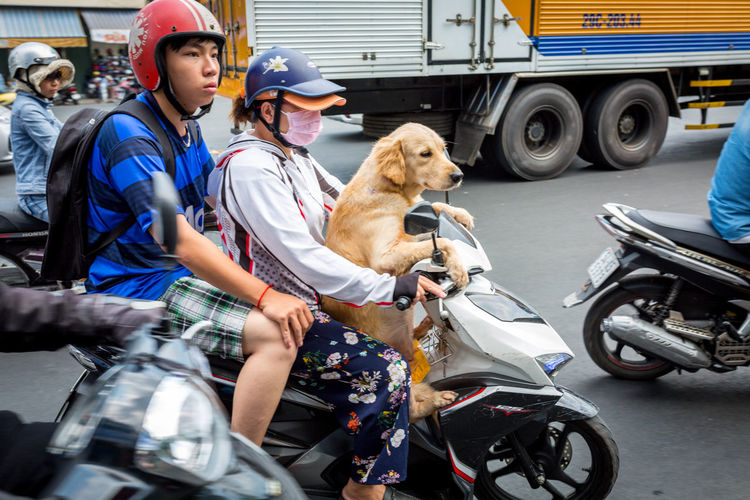 Traveling dogs (3) - Motorbikes in Vietnam (Ho Chi Minh City, VN, 2019) #Dog #Funny #Motorbike #Saigon #Traveling Domestic Animals Mammal Pets Dog Canine Domestic Mode Of Transportation Transportation One Animal Land Vehicle Real People Adult Group Of People Motorcycle Vertebrate People Sitting Differing Abilities Wheelchair Riding Pet Owner