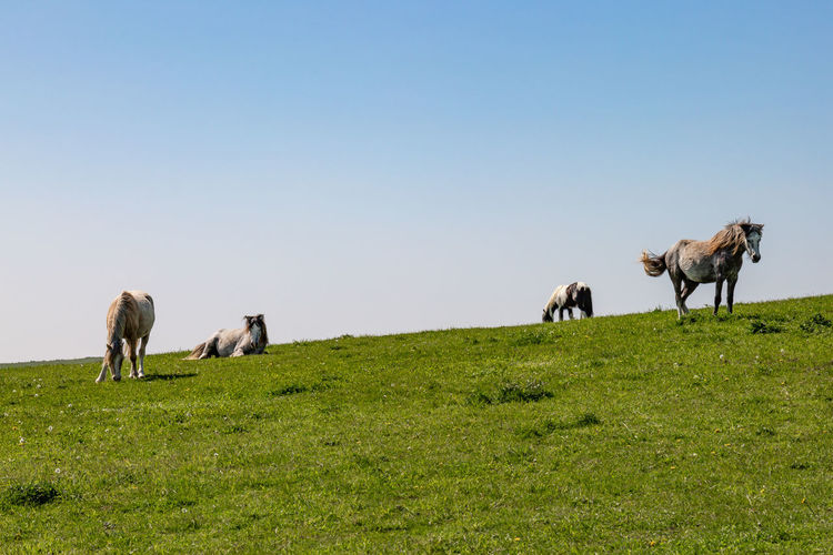 Four horses on a hillside in Sussex, on a sunny spring day South Downs Animal Animal Themes Animal Wildlife Clear Sky Domestic Domestic Animals Field Grass Grazing Green Color Group Of Animals Herbivorous Horse Land Landscape Livestock Mammal No People Outdoors Pets Plant Sky Sussex Vertebrate