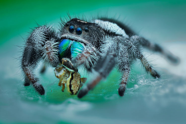 Close-up of spider