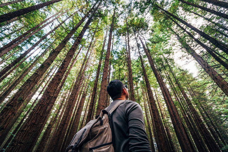 Low angle view of man standing against trees in forest