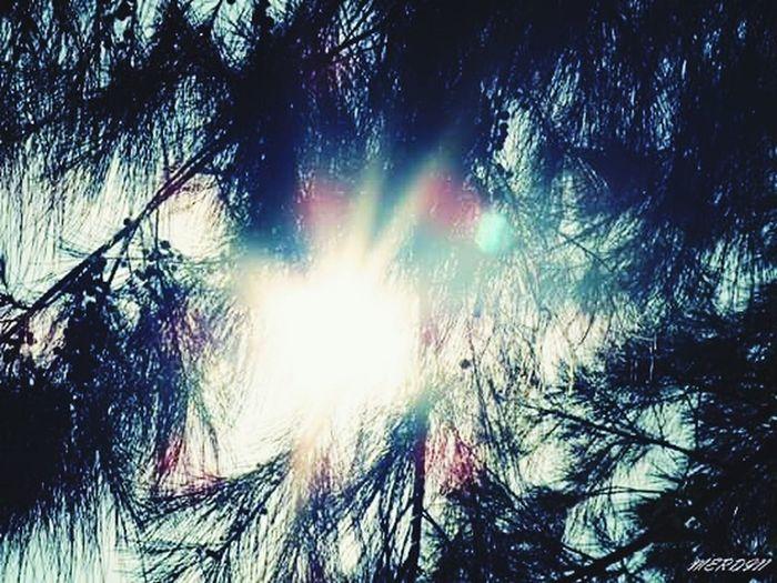 Sun Tree Nature