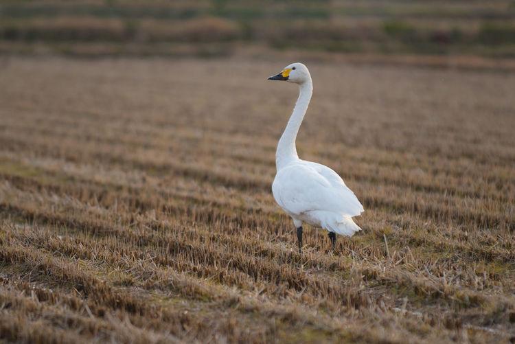 White bird on field