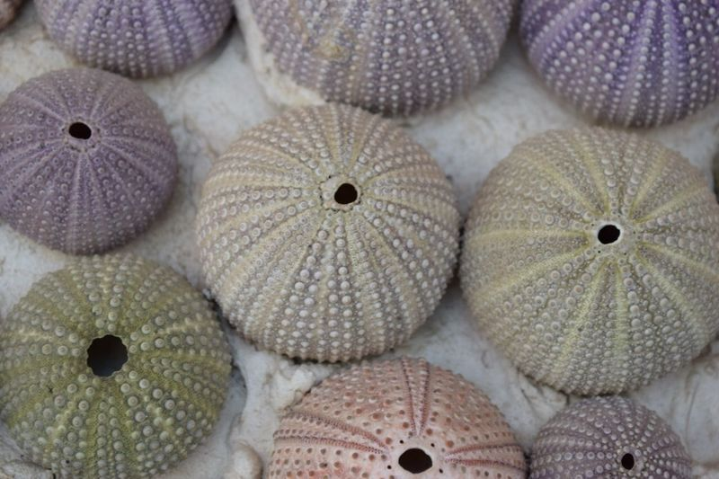 High angle view of sea urchins at store