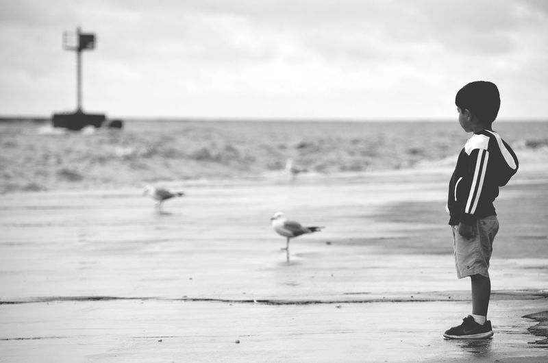 Boy By Water Boy Watching Birds Chicago Lake Front Chicago Illinois Little Boy Watching Boy By Lake July Showcase Eyeemphoto Streetphotography Nature Photography Street Photography Streetphoto_bw Street Portrait Live For The Story