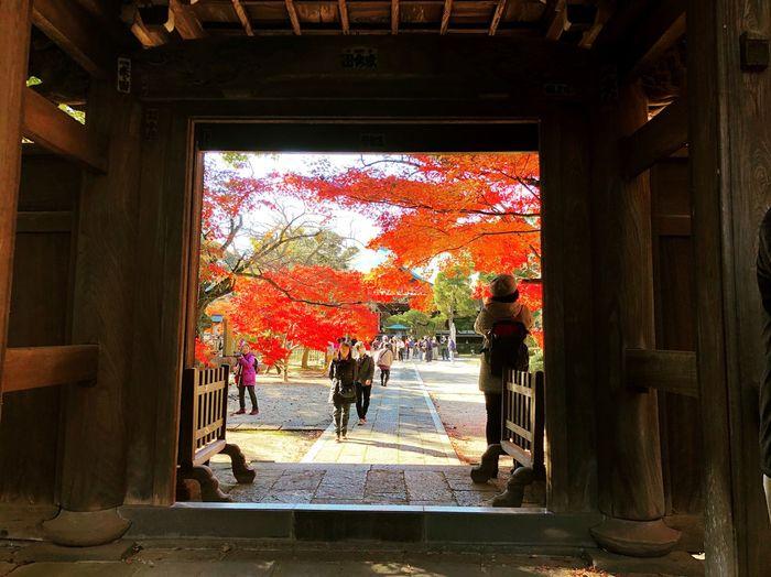 東漸寺 松戸 Chiba,Japan Autumn Leisure Activity Beauty In Nature 紅葉 Autumn Leaves Autmn Colors Japan Photography Japan Photos 3XSPUnity 近所 Enjoying Life Relaxing Relaxation